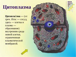 Цитоплазма Цитопла́зма— (от греч. Итос— сосуд, здесь— клетка и плазма— об