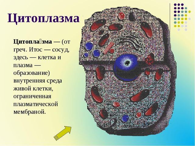 Цитоплазма Цитопла́зма— (от греч. Итос— сосуд, здесь— клетка и плазма— об...