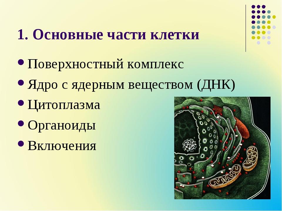 1. Основные части клетки Поверхностный комплекс Ядро с ядерным веществом (ДНК...
