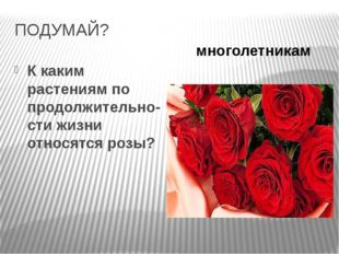 ПОДУМАЙ? К каким растениям по продолжительно-сти жизни относятся розы? многол