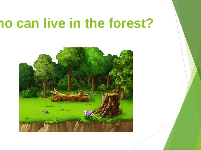 Who can live in the forest?