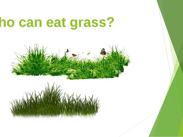 Who can eat grass?
