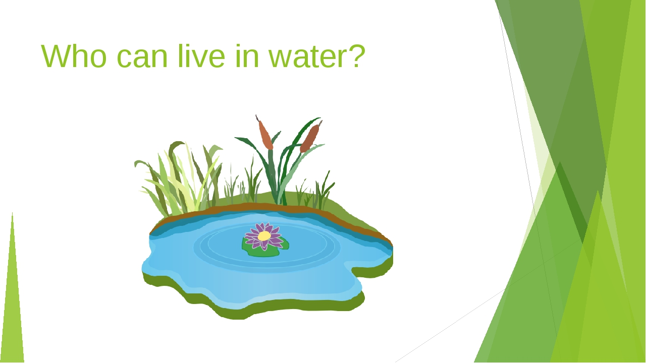 Who can live in water?