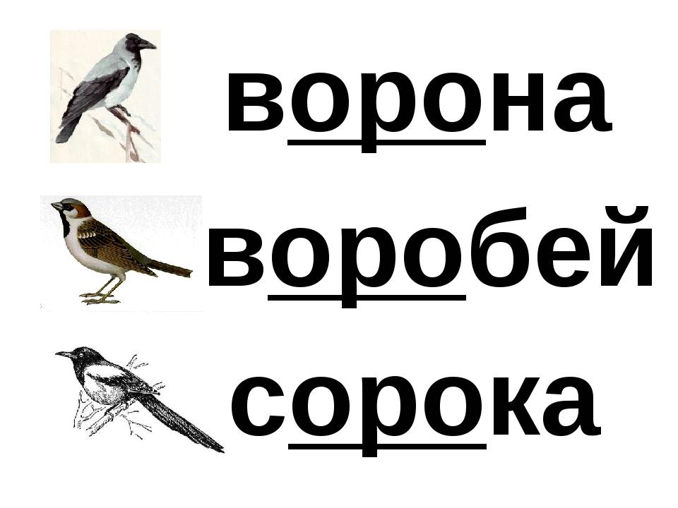 ворона сорока воробей