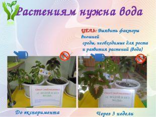 Растениям нужна вода Опыт (наблюдение) №1 «С ВОДОЙ И БЕЗ ВОДЫ» ЦЕЛЬ: Выявить