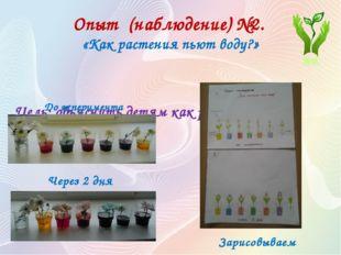 Опыт (наблюдение) №2. «Как растения пьют воду?» Цель: объяснить детям как ра