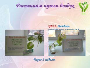Растениям нужен воздух Опыт (наблюдение) «МОЖЕТ ЛИ РАСТЕНИЕ ДЫШАТЬ» ЦЕЛЬ: Выя