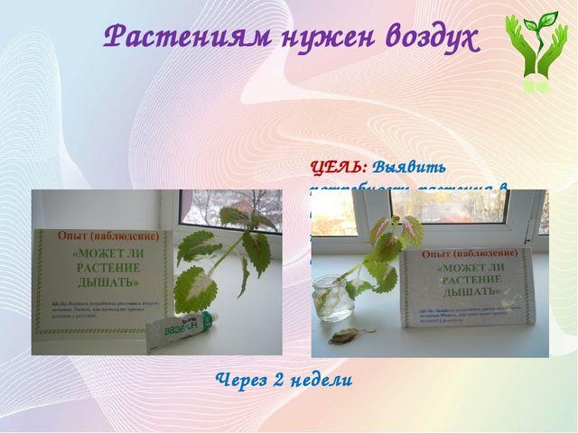 Растениям нужен воздух Опыт (наблюдение) «МОЖЕТ ЛИ РАСТЕНИЕ ДЫШАТЬ» ЦЕЛЬ: Выя...
