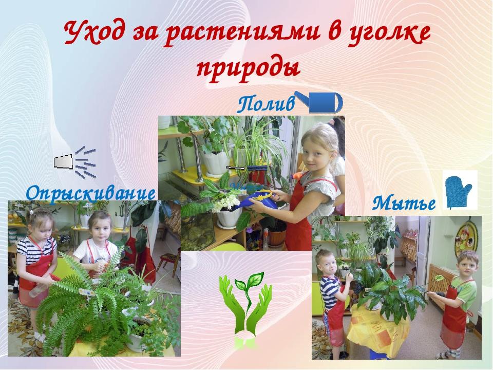 Уход за растениями в уголке природы Полив Опрыскивание Мытье Мытье