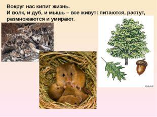 Вокруг нас кипит жизнь. И волк, и дуб, и мышь – все живут: питаются, растут,