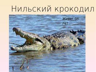 Нильский крокодил Живет 68 лет