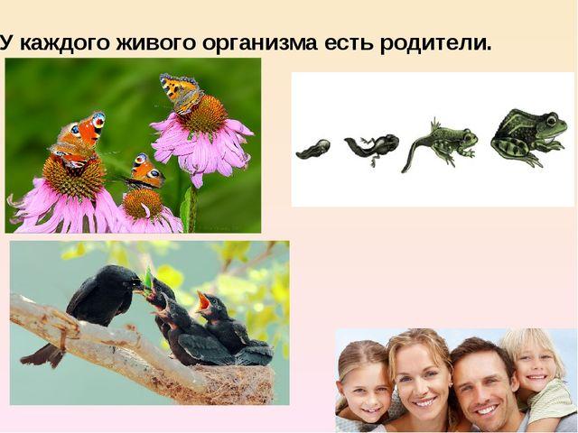 У каждого живого организма есть родители.