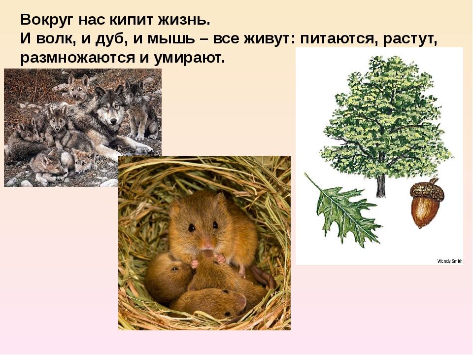 Вокруг нас кипит жизнь. И волк, и дуб, и мышь – все живут: питаются, растут,...