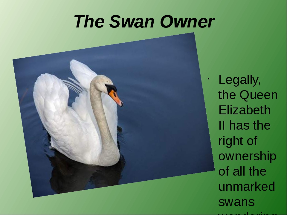 The Swan Owner Legally, the Queen Elizabeth II has the right of ownership of...