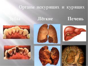 Органы некурящих и курящих людей Зубы Лёгкие Печень