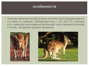 Наличие сумчатых костей (особых косточек таза, которые развиты и у самок, и у