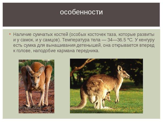 Наличие сумчатых костей (особых косточек таза, которые развиты и у самок, и у...