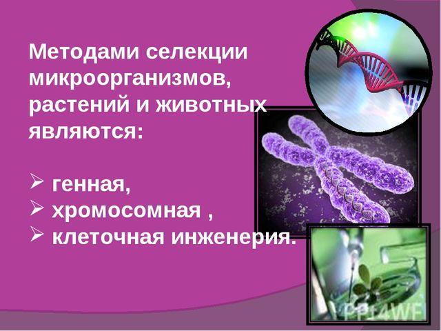 Методами селекции микроорганизмов, растений и животных являются: генная, хром...