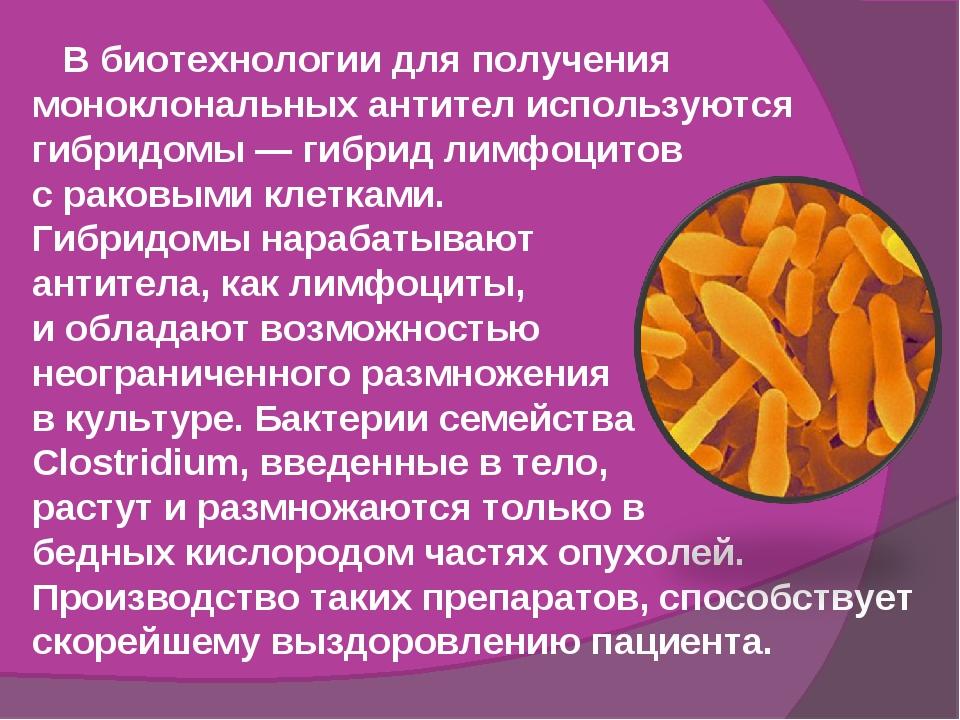 В биотехнологии для получения моноклональных антител используются гибридомы...