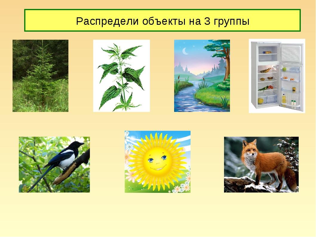 Распредели объекты на 3 группы