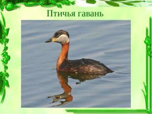 Птичья гавань