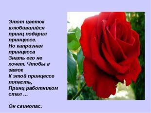 Этот цветок влюбившийся принц подарил принцессе. Но капризная принцесса Знать