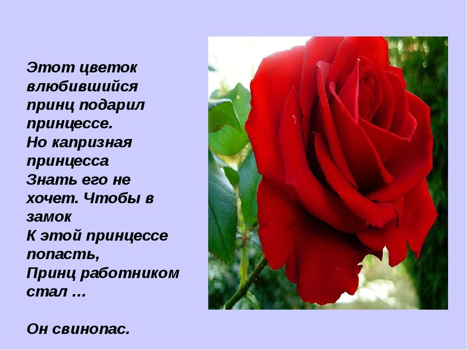 Этот цветок влюбившийся принц подарил принцессе. Но капризная принцесса Знать...