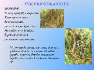 Растительность 1000видов В лесу сумрак и сырость. Растительность вечнозеленая
