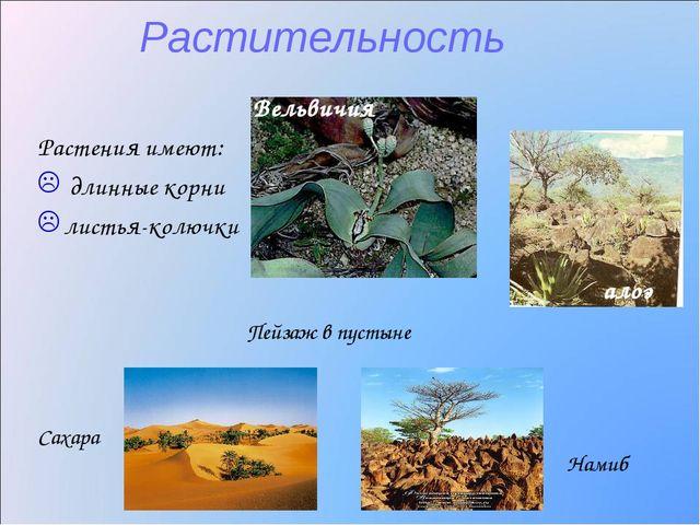 Растительность Растения имеют: длинные корни листья-колючки Вельвичия Пейзаж...