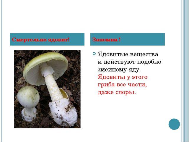 Ядовитые вещества и действуют подобно змеиному яду. Ядовиты у этого гриба все...