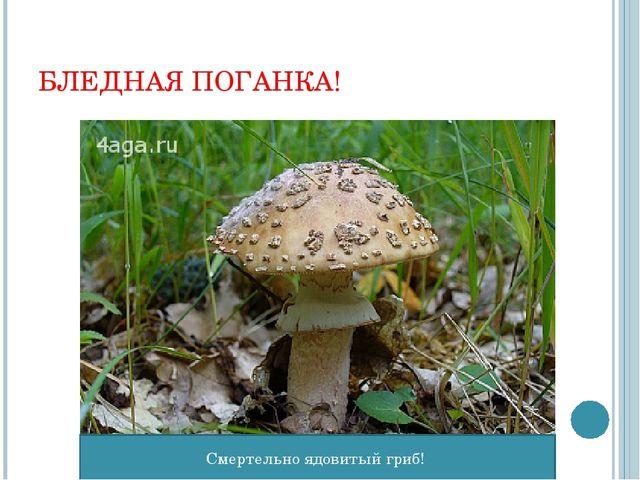 БЛЕДНАЯ ПОГАНКА! Смертельно ядовитый гриб!