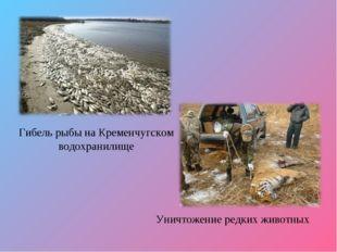 Гибель рыбы на Кременчугском водохранилище Уничтожение редких животных