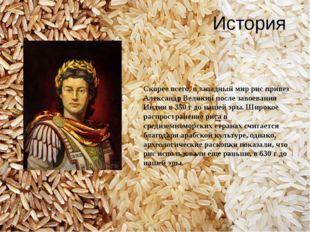История Скорее всего, в западный мир рис привез Александр Великий после завое