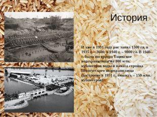 И уже в 1931 году рис занял 1300 га, в 1935 г. – 3600, в 1940 г. – 9800 га. В