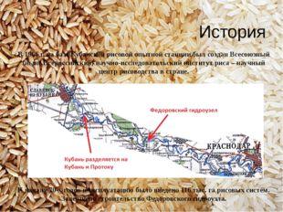 В 1966 г. на базе Кубанской рисовой опытной станции был создан Всесоюзный (ны