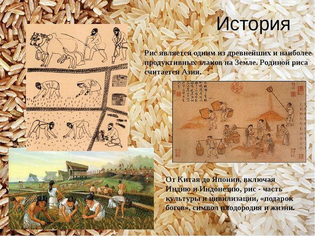 История Рис является одним из древнейших и наиболее продуктивных злаков на Зе...