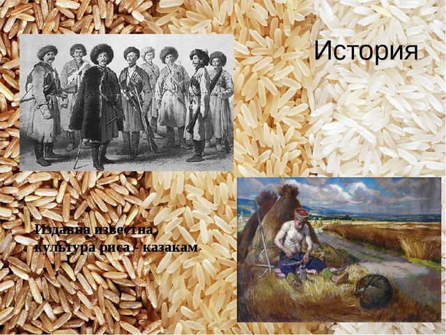 Издавна известна культура риса - казакам История