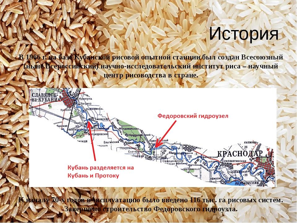 В 1966 г. на базе Кубанской рисовой опытной станции был создан Всесоюзный (ны...