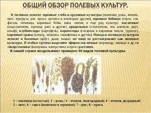 К полевым относят зерновые хлеба и крупяные культуры (пшеница, рожь, ячмень,