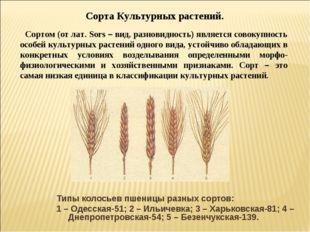 Типы колосьев пшеницы разных сортов: 1 – Одесская-51; 2 – Ильичевка; 3 – Харь