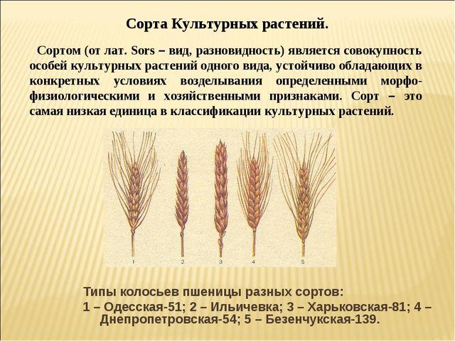 Типы колосьев пшеницы разных сортов: 1 – Одесская-51; 2 – Ильичевка; 3 – Харь...