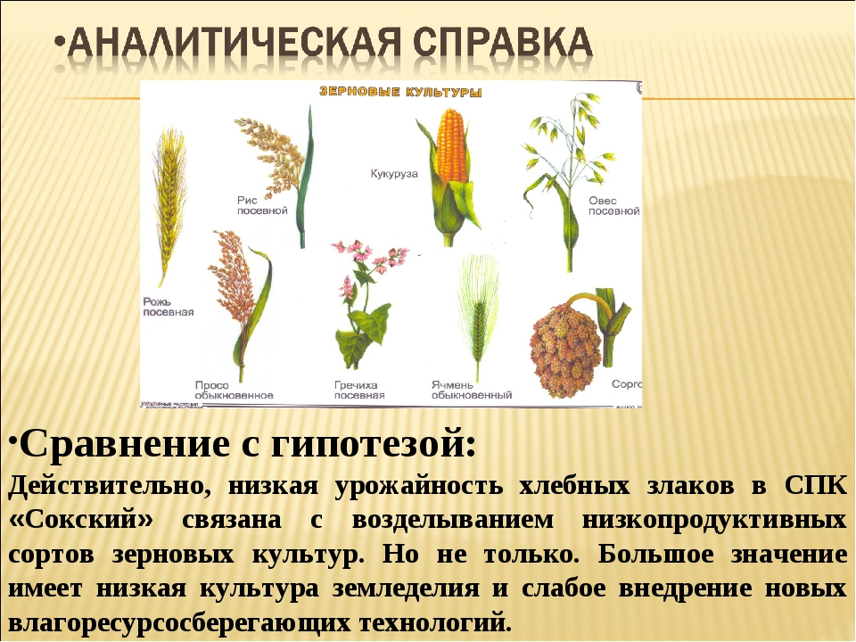 Сравнение с гипотезой: Действительно, низкая урожайность хлебных злаков в СПК...
