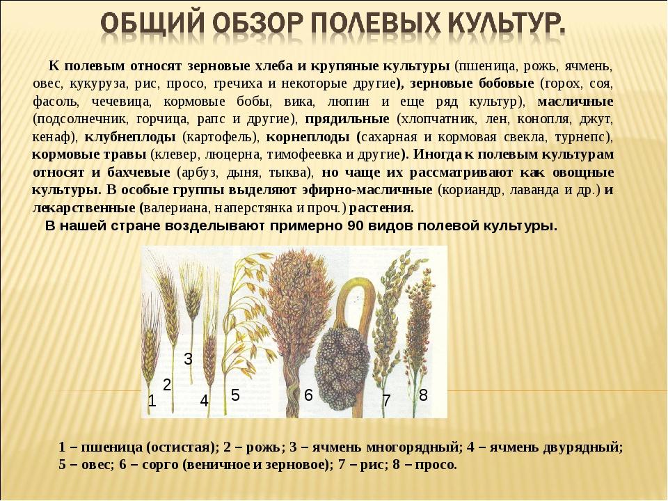 К полевым относят зерновые хлеба и крупяные культуры (пшеница, рожь, ячмень,...