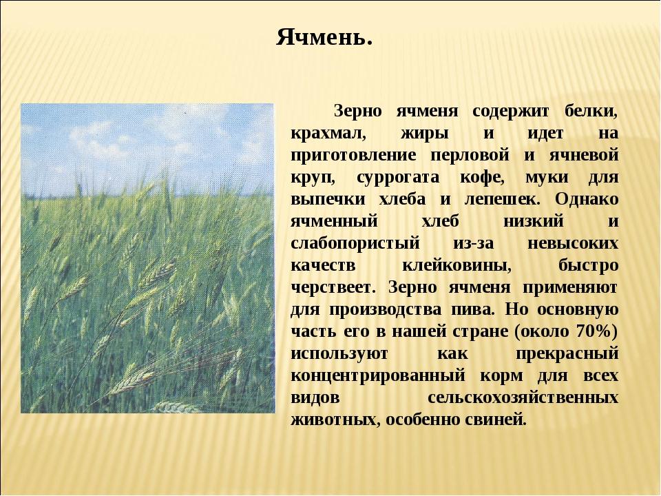 Ячмень. Зерно ячменя содержит белки, крахмал, жиры и идет на приготовление пе...