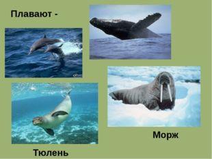 Плавают - Морж Тюлень