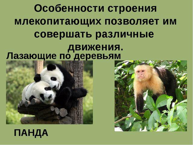 Особенности строения млекопитающих позволяет им совершать различные движения....