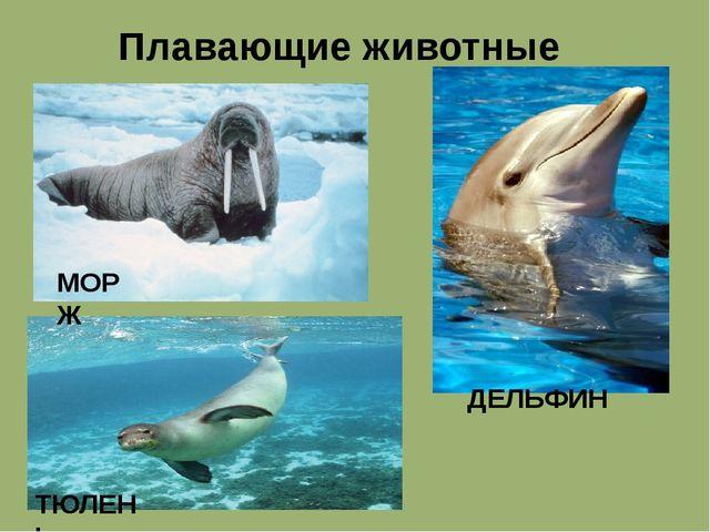 Плавающие животные МОРЖ ТЮЛЕНЬ ДЕЛЬФИН