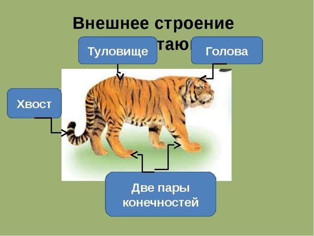 Внешнее строение млекопитающих Голова Туловище Хвост Две пары конечностей