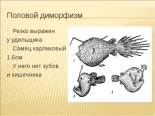 Половой диморфизм Резко выражен у удильщика Самец карликовый 1.6см У него нет