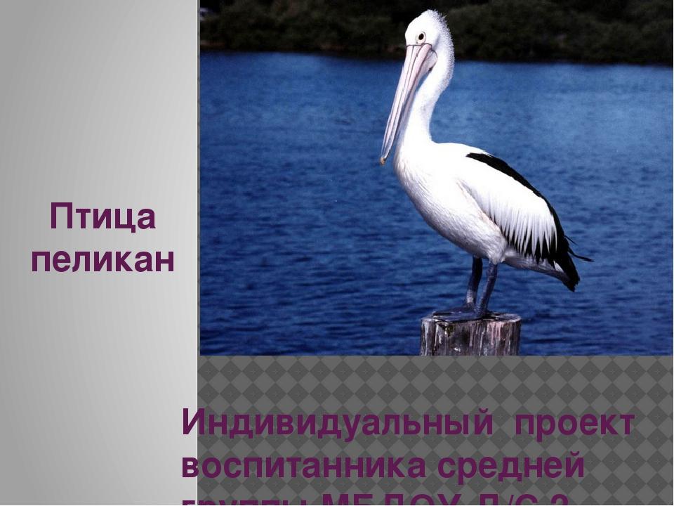 Птица пеликан Индивидуальный проект воспитанника средней группы МБДОУ Д/С 2 С...